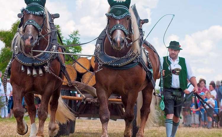 Br Pfri Holz Kaltbl 0072 D Roha Brauchtum Kaltblut Pferd Fest Holzhausen Holzfuhrwerk 2