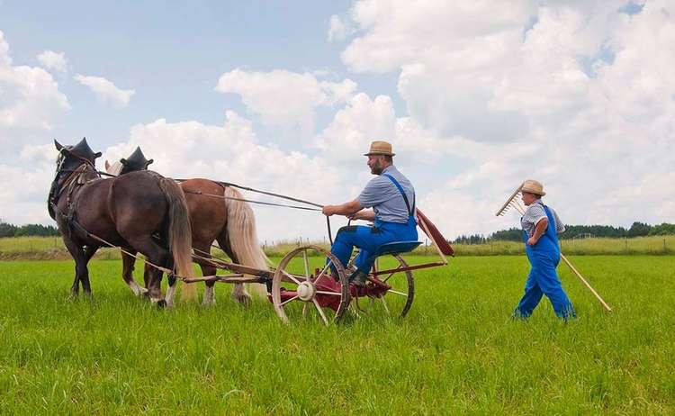 Kaltblut Pferd Fest Arbeit Holzhausen Maehwerk 1